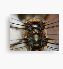 dragonfly6 Canvas Print