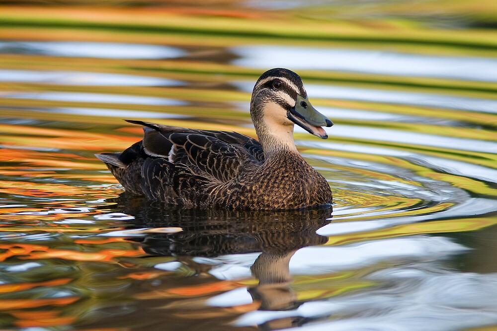 Duck la orange by henleyhelen