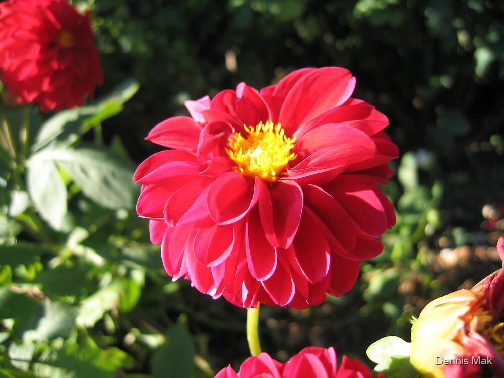 Red flower by Dennis Mak