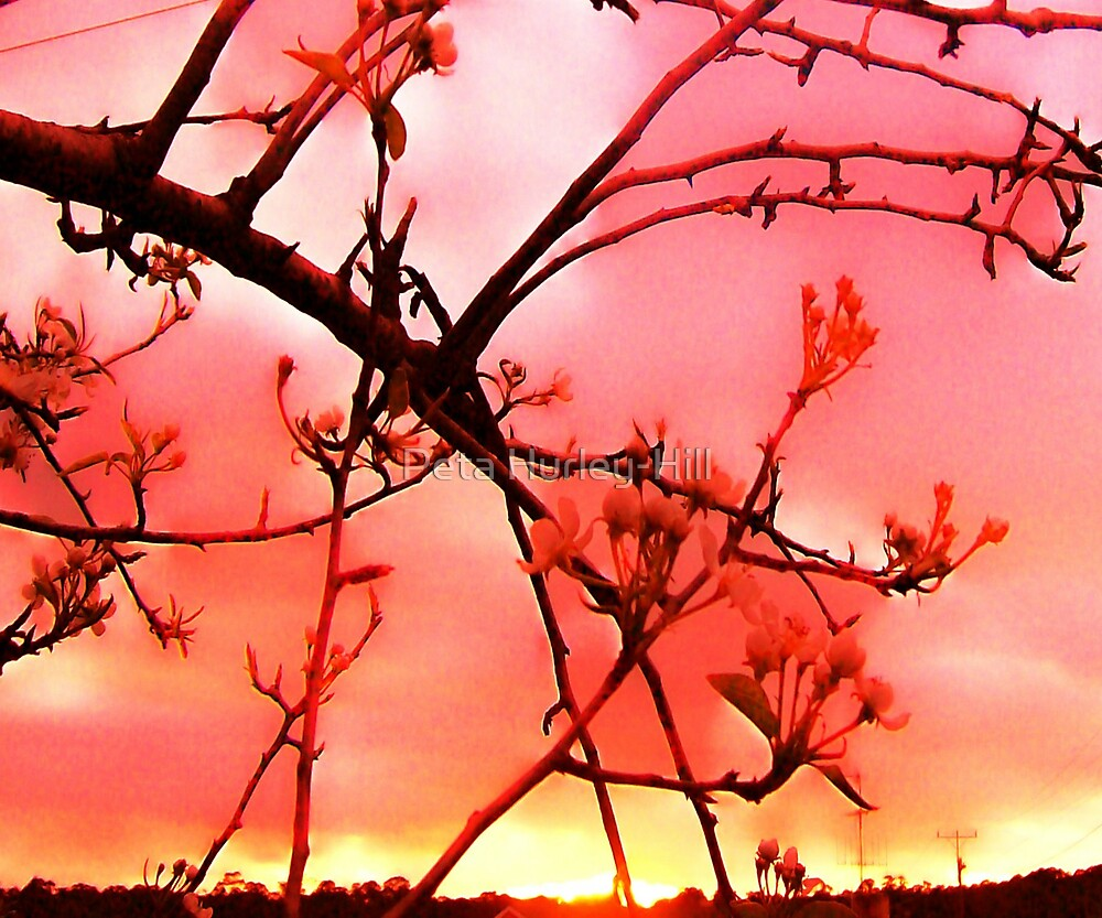 pink clouds by Peta Hurley-Hill