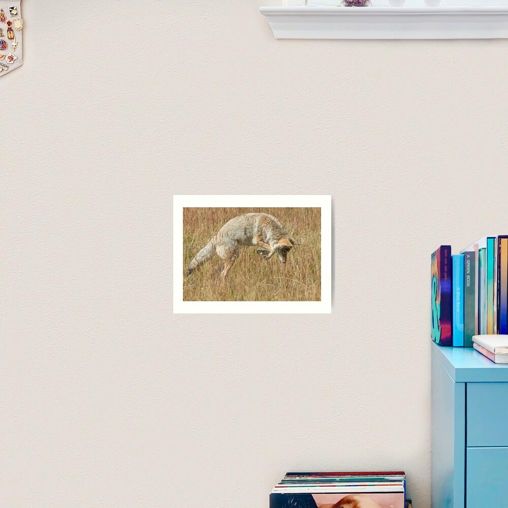 Coyote pounce Art Print
