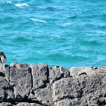 Bird on a rock by LifeisDelicious