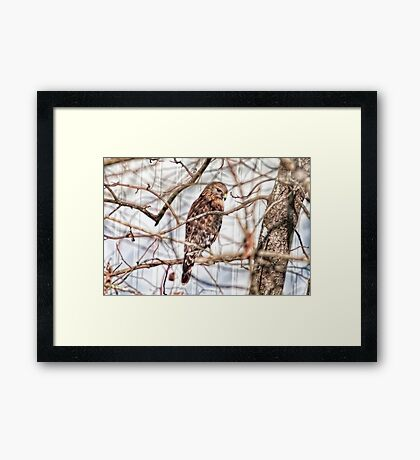 Surveying the Buffet Table Framed Print