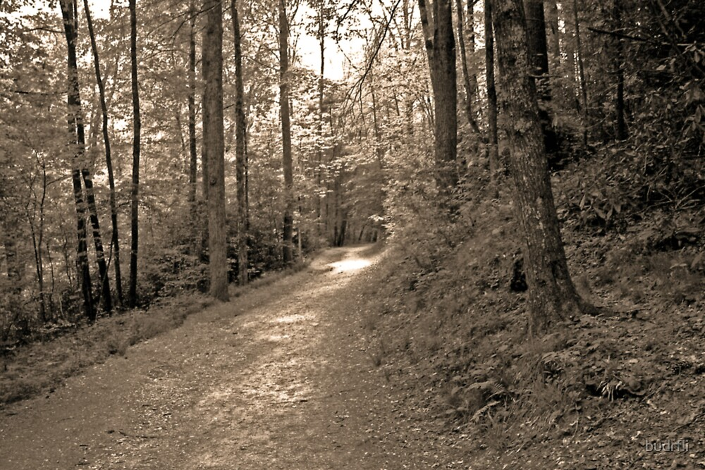 once upon a sunlit path... by budrfli