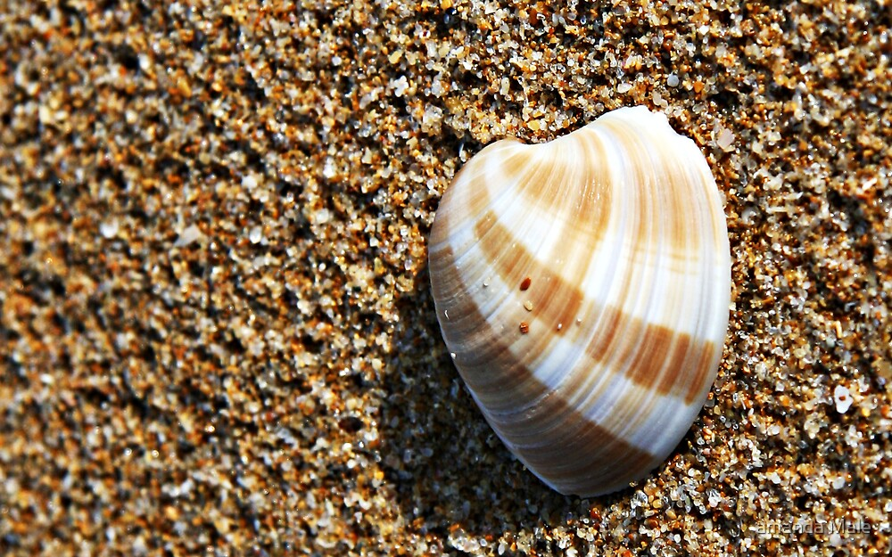 she sells sea shells  by amanda Male