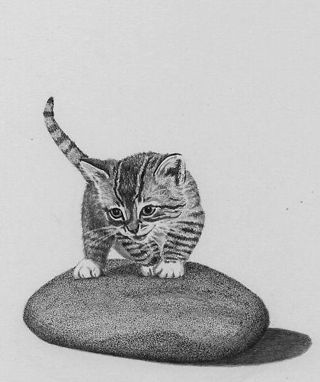 Cat on a Rock by alisonbelinda