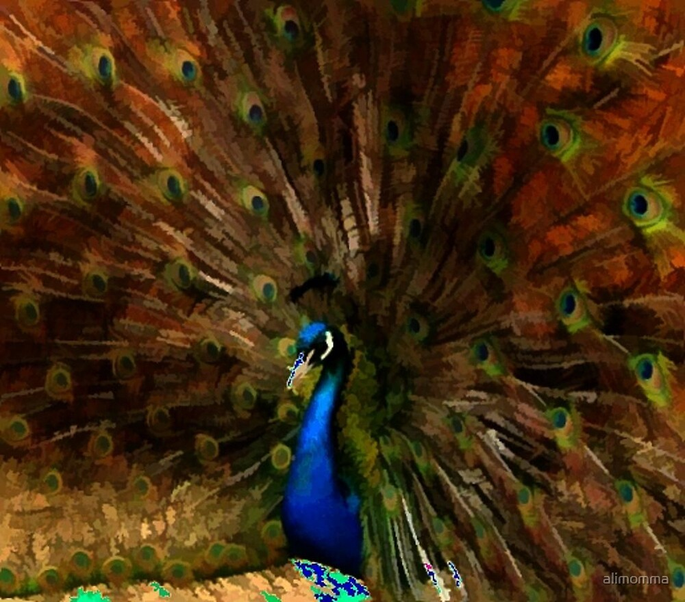 Painted Peacock by alimomma