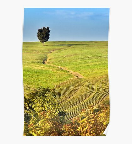 The tree and the furrows Poster