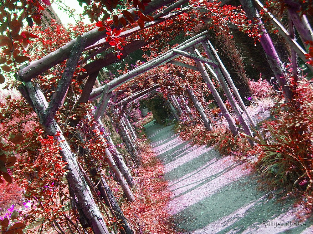 Enchanting by SallyAnnLowe