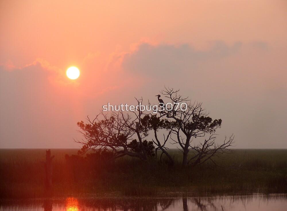Blue Heron Silhouette by shutterbug3070