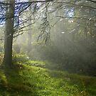 Autumn mist - Ballycuggaran Woods, Ireland by Orla Flanagan