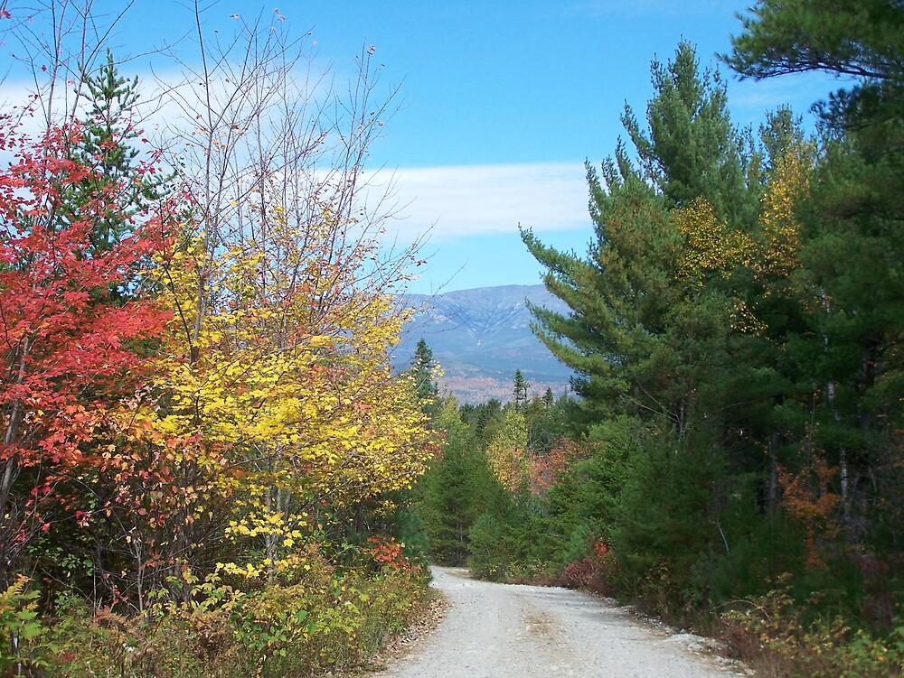 Fall Road by Gene Cyr