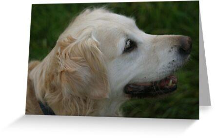 Labrador Dog by purplephotography