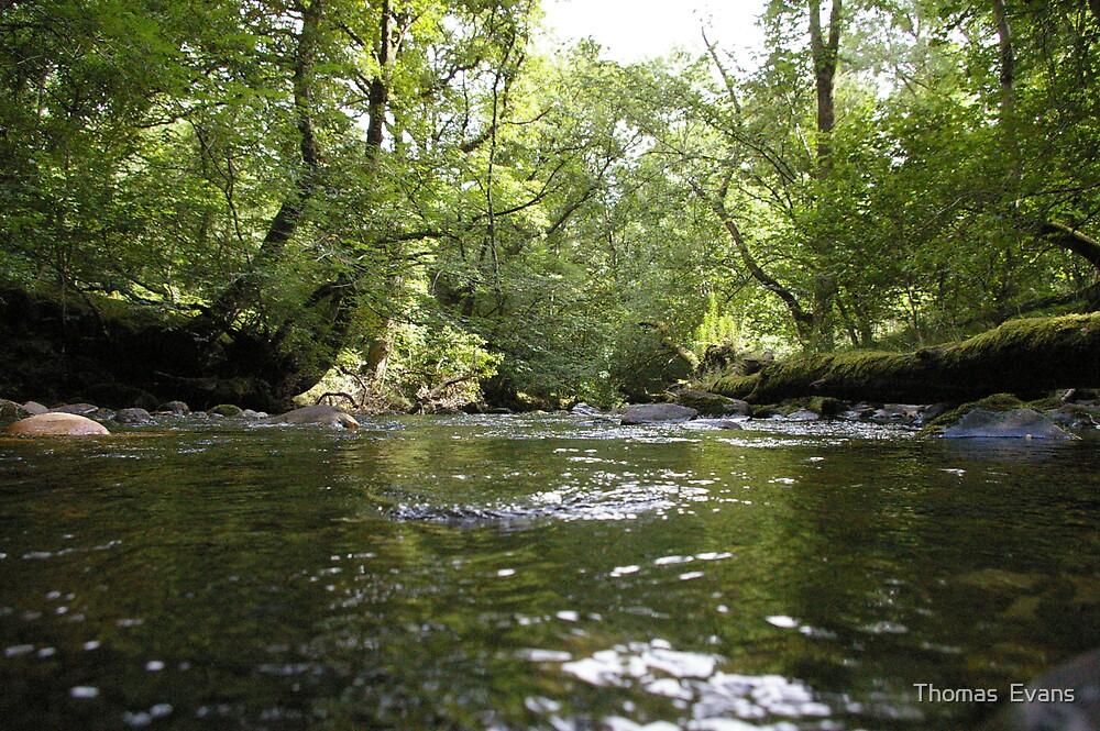 River by Thomas  Evans