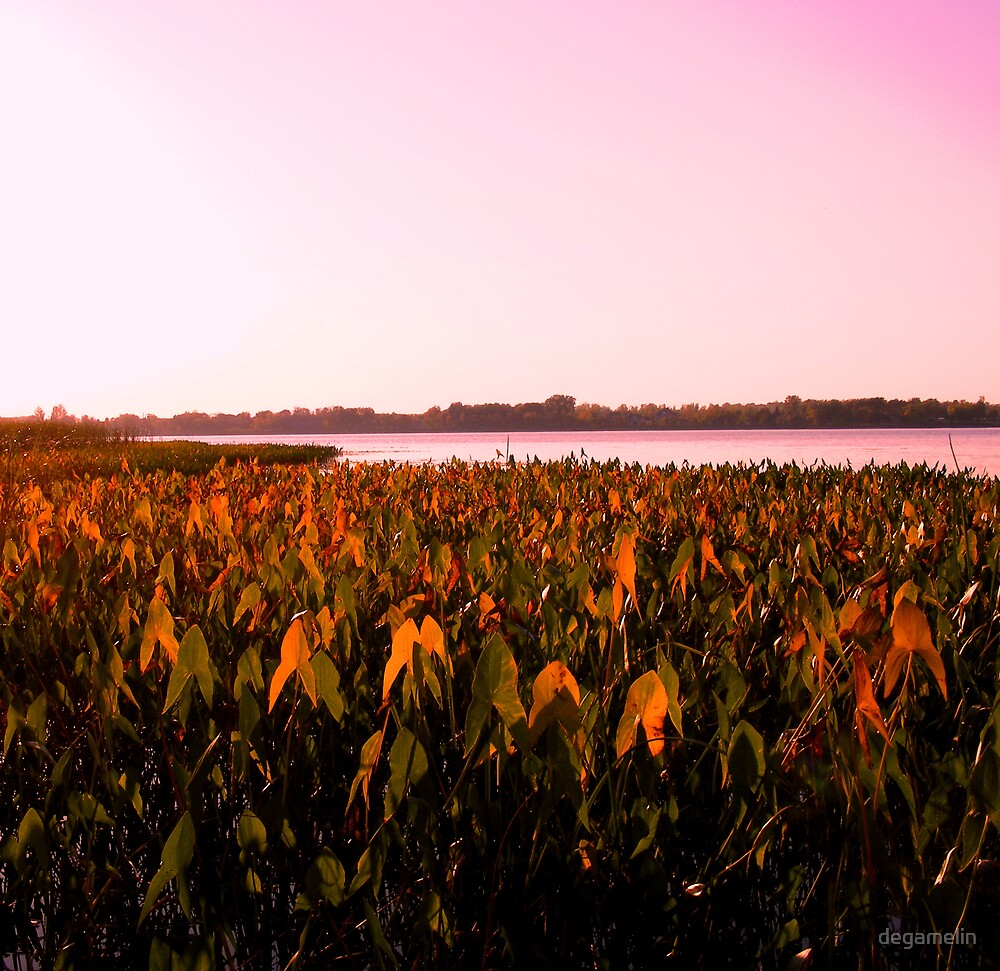 late summer field  by degamelin