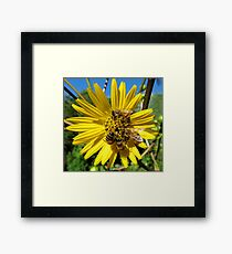 Popular Flower Framed Print