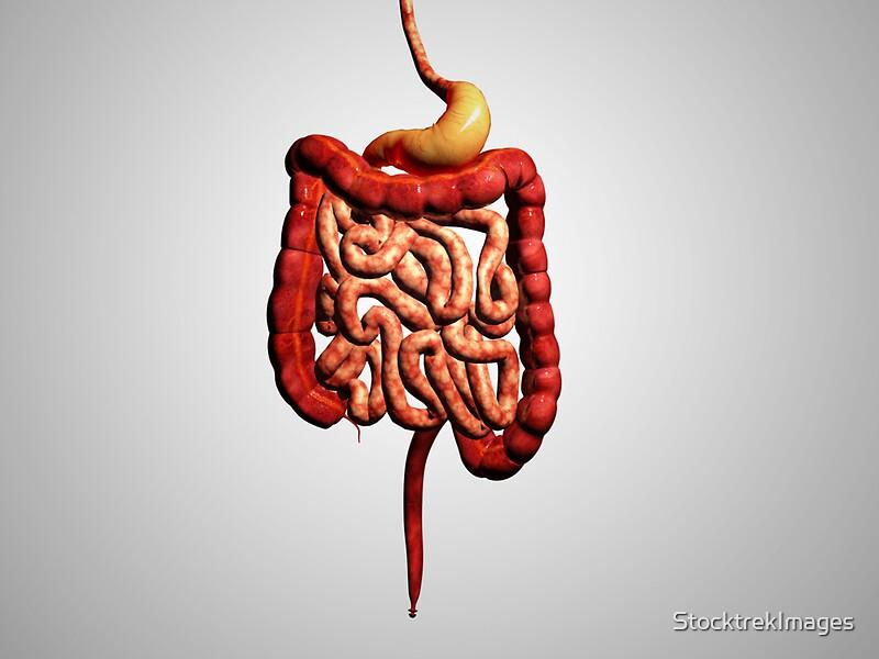 Pegatinas «Vista frontal del sistema digestivo humano.» de ...