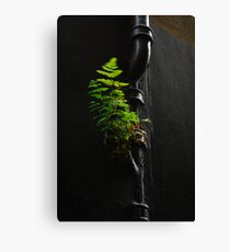 Urban Foliage Canvas Print