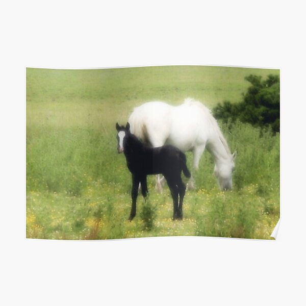 Mare & Foal Poster