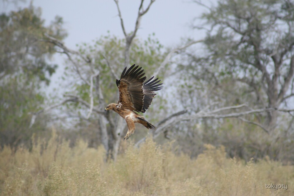 Landing eagle by tokyoty