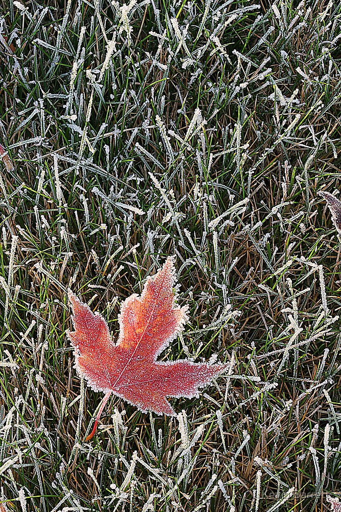 A Frosty October Morning by Kevin Barrett