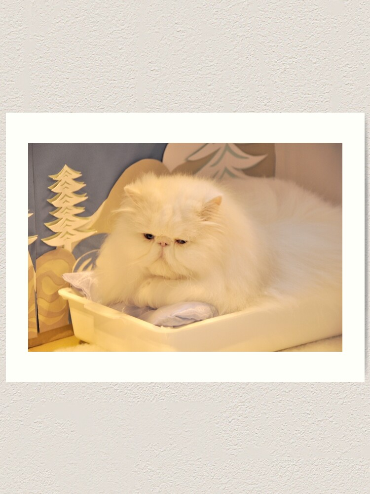 Alternate view of White Persian cat Art Print