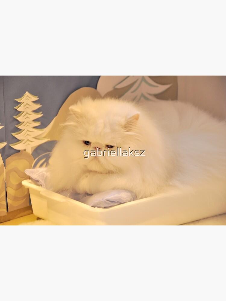 White Persian cat by gabriellaksz