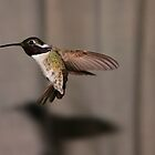 Hummer 2 by BarbaraWilliams
