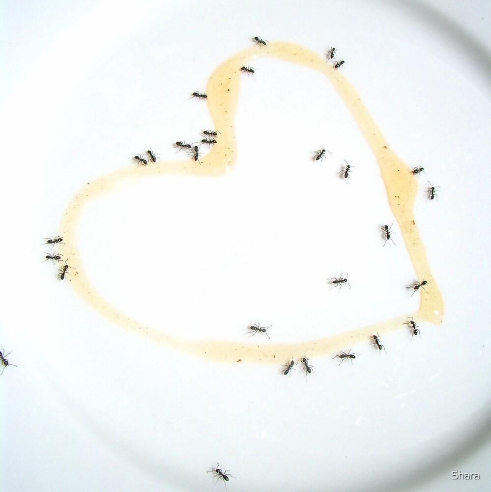 Ants & Sweet Heart by Shara
