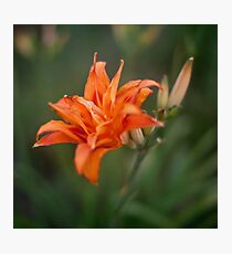 Double Lily Photographic Print