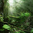 Limelight by Steven  Sandner