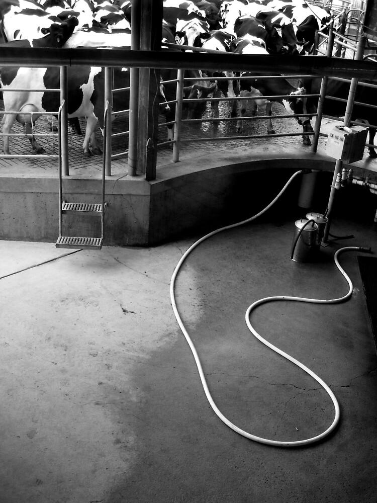 Milk by Bruce  Watson