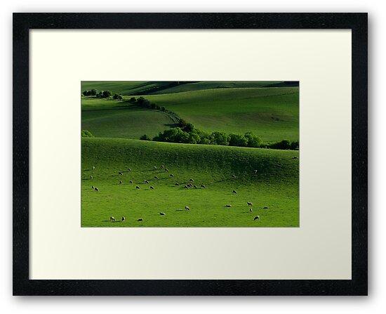 Meadow by Peter Daalder