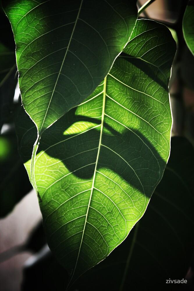 A leaf by zivsade