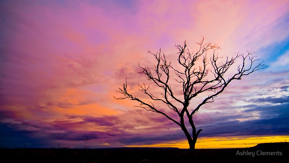 Spindly Dusk by Ashley Clements