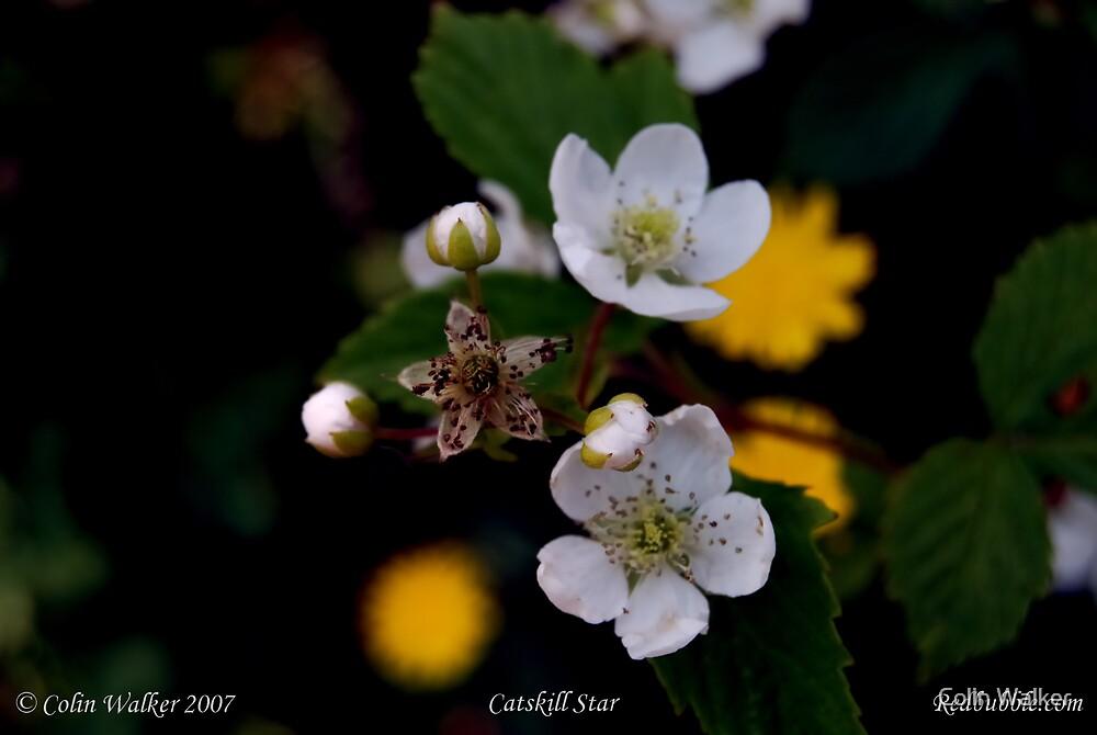 Catskill Star by Colin Walker