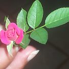 tiny rose by MyCarriageAwaits