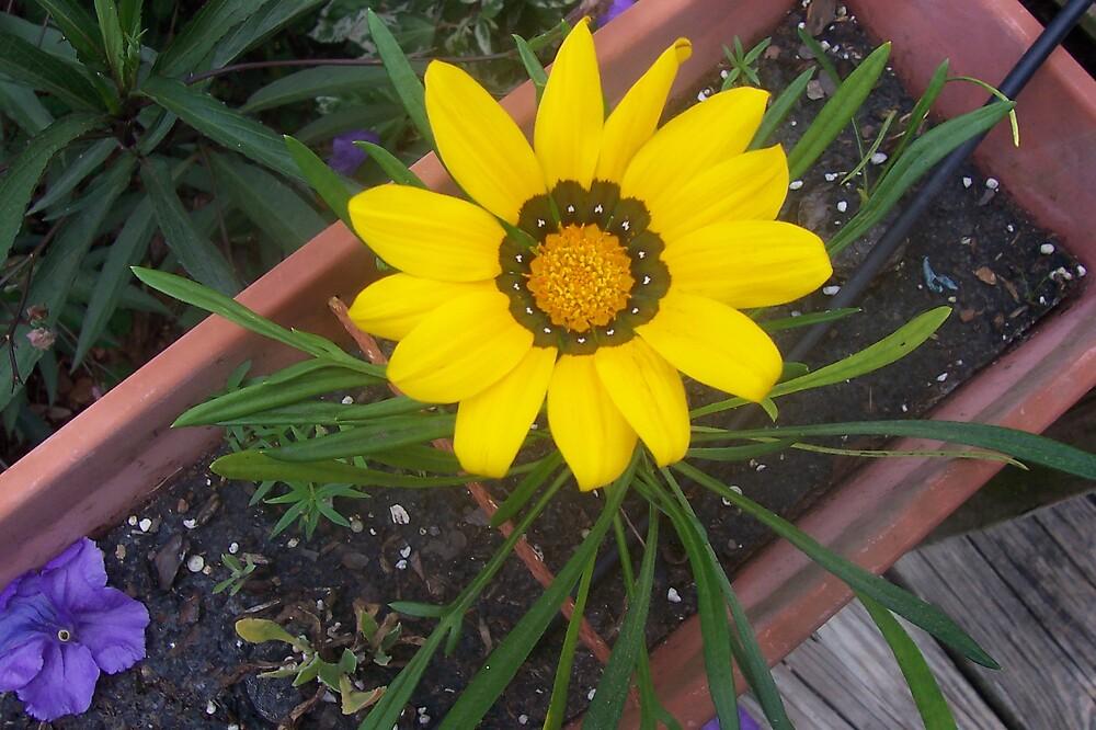Sunny Days by MyCarriageAwaits