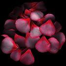 Geranium petals by hagnes