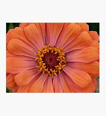 Peach! Photographic Print