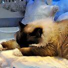 Resting amid snowflakes by gabriellaksz