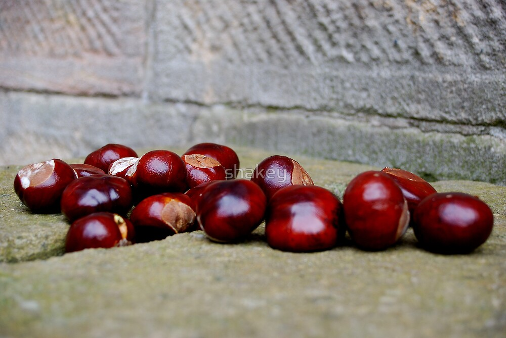 Conkers by shakey