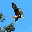 Eagle Series 1 by Deborah  Benoit