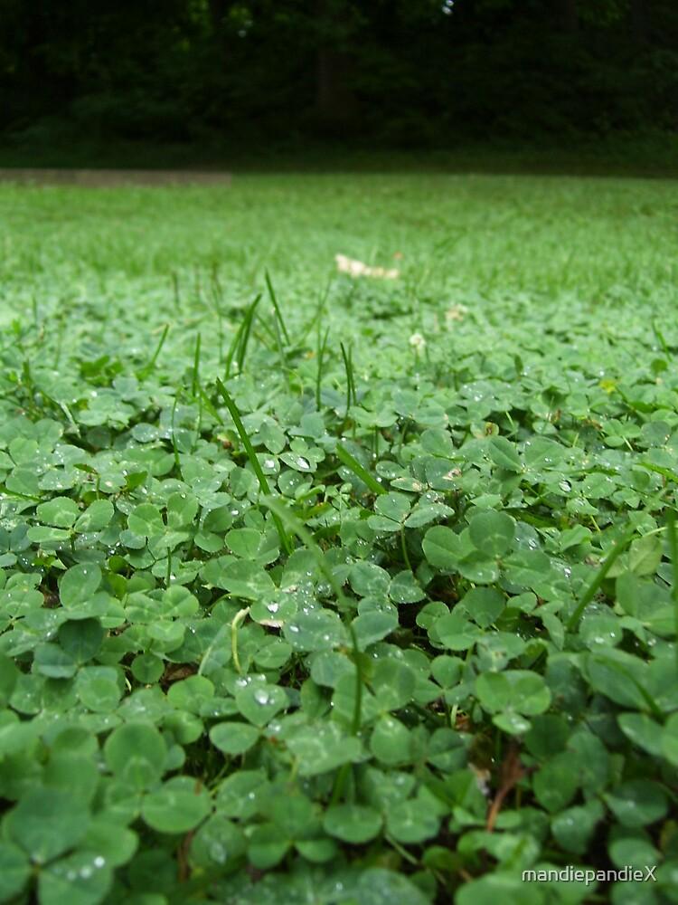 Field of Green by mandiepandieX