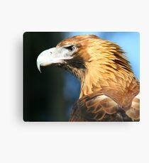 Australian Wedgetail Eagle Canvas Print