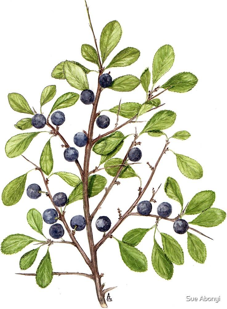 Blackthorn - Prunus spinosa by Sue Abonyi