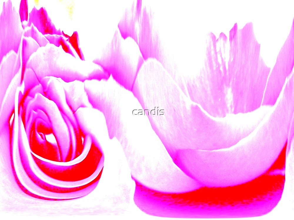 fine art photography by candis