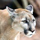 Cougar by Jerry  Mumma