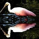 spoonbill in the lake by sonygirl