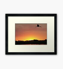 Bye Bye bird Framed Print